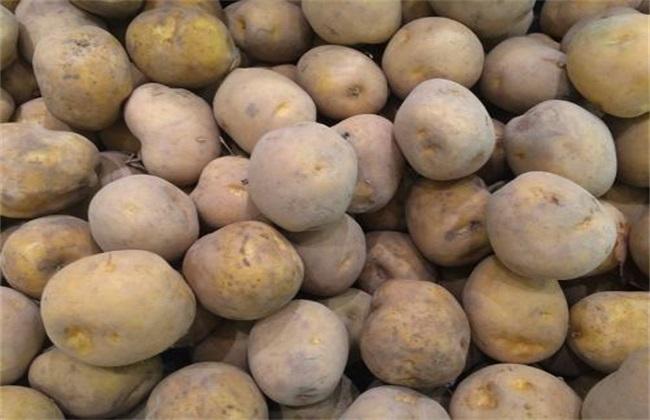 秋季土豆什么时候种植