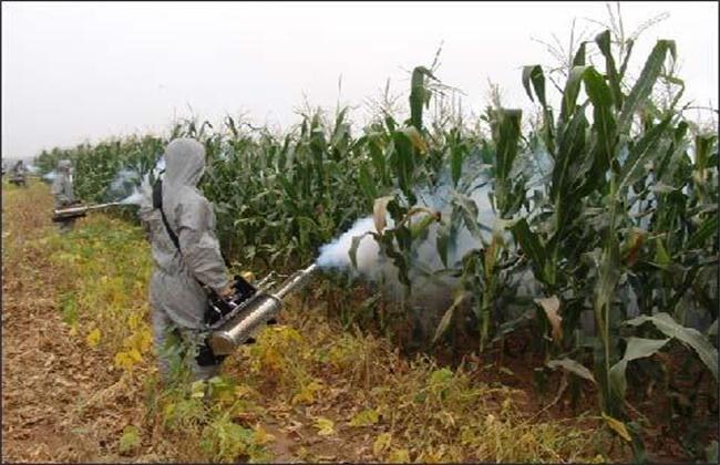 玉米粘虫防控不佳原因及正确防控措施