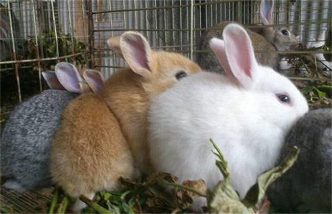 母兔�a仔拒食 母兔不吃怎么�k