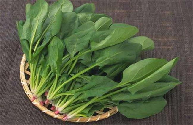 秋菠菜种植时间 菠菜种植方法