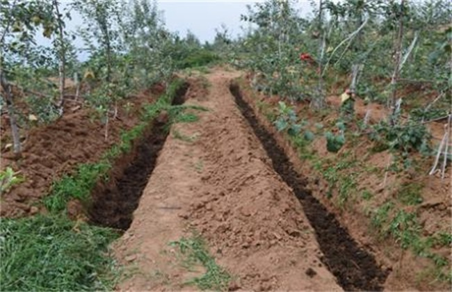 苹果树施肥时间和方法