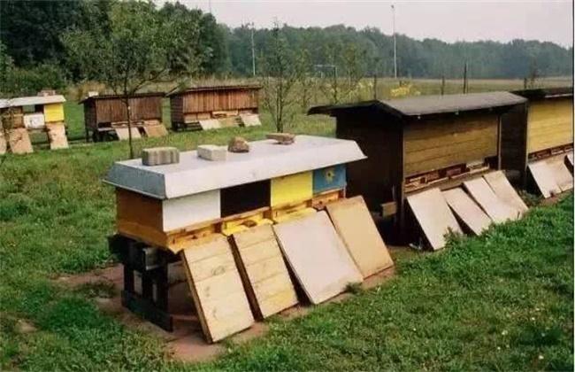 新手养蜂容易失败的原因