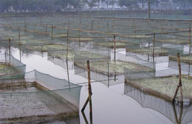 黄鳝养殖秋季管理要点