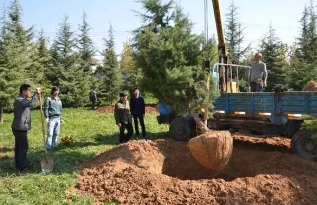 秋季栽植树木注意事项