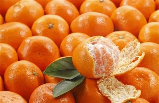 橘子价格多少钱一斤