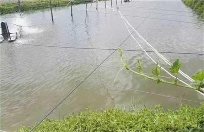 池塘倒藻原因及处理方法