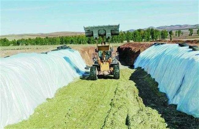 秋季肉牛育肥技术