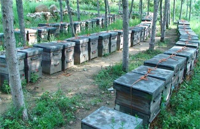 蜜蜂的日常管理