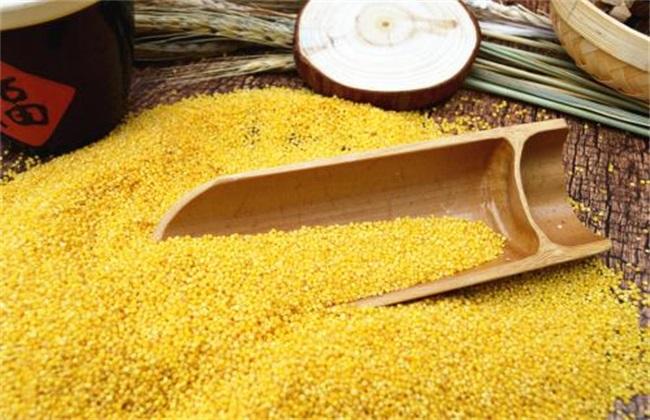 小米多少钱一斤 小米市场价格