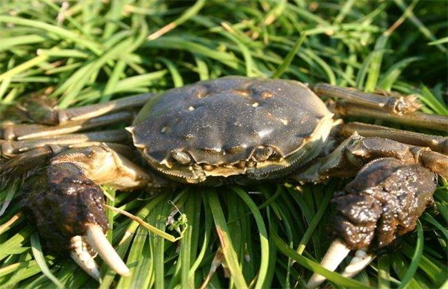 螃蟹多少钱一斤 螃蟹价格