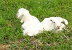 羔羊护理及饲养管理