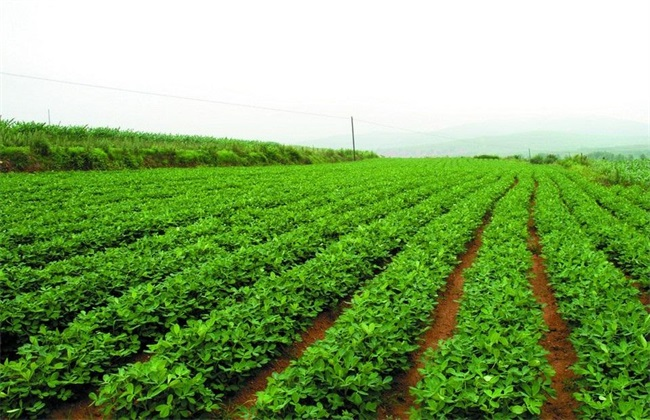 花生灌溉合理方法