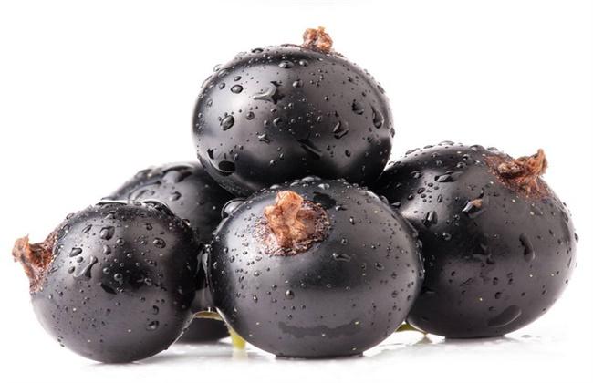 黑加仑和葡萄的区别