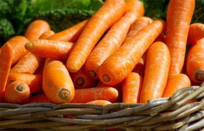 白萝卜不能和什么一起吃