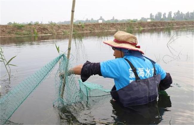 秋季水产养殖注意事项