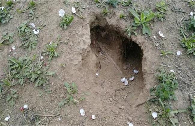 散养兔子要注意什么