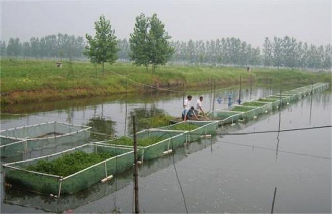 水产养殖行业常见风险