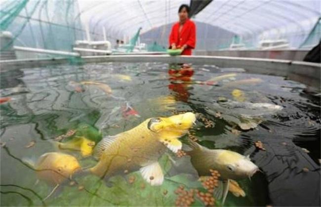 如何降低养鱼成本