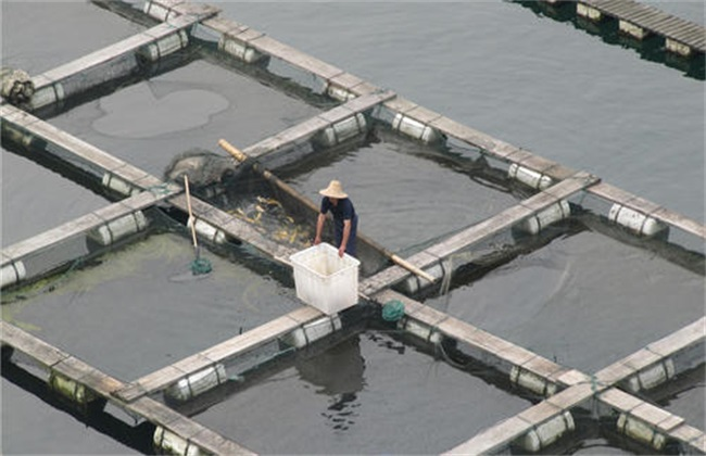 鱼塘为什么会缺氧