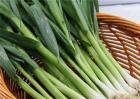 十月适合种植的蔬菜有哪些