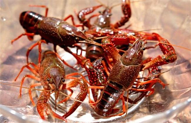 小龙虾养殖的水质管理