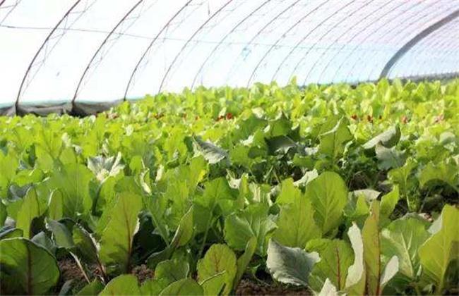 冬季蔬菜育苗注意事项