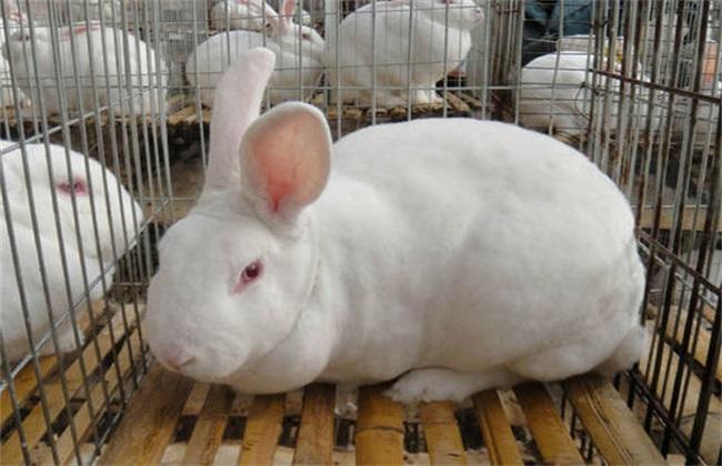 养兔喂饲料时常见问题