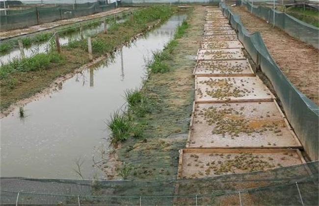 蛙池如何进行消毒清洗