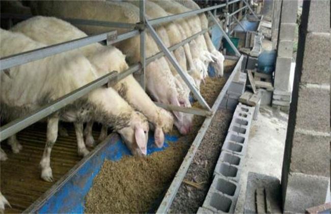 养羊的基本知识有哪些?新手养羊需要掌握的几个要点