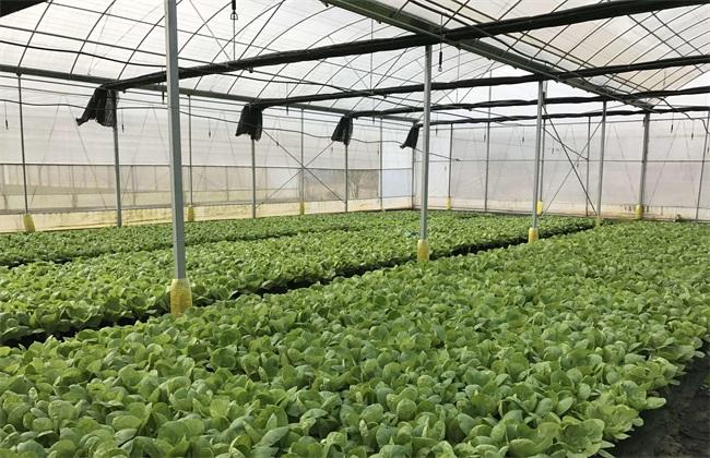 冬季蔬菜育苗注意 冬季育苗