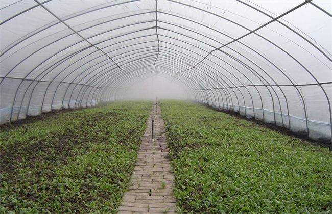 蔬菜使用植物激素的注意事项