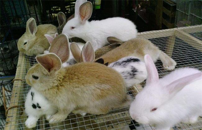 冬季肉兔饲养方法