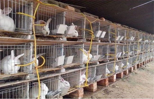 冬季肉兔饲养 肉兔饲养方法
