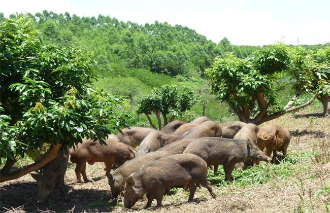 农村现在养殖什么最赚钱