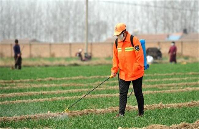 冬小麦如何施肥