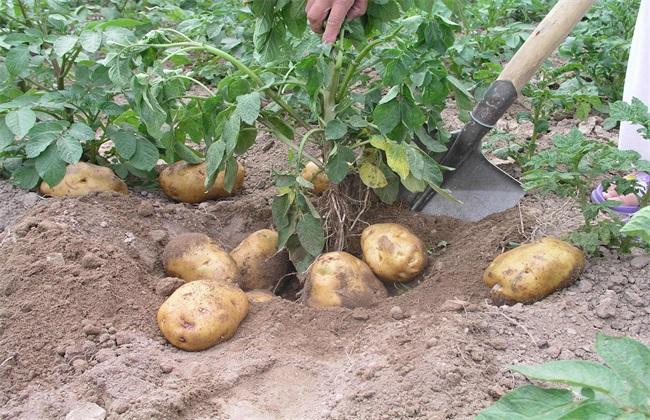 防治蔬菜病害 生态措施