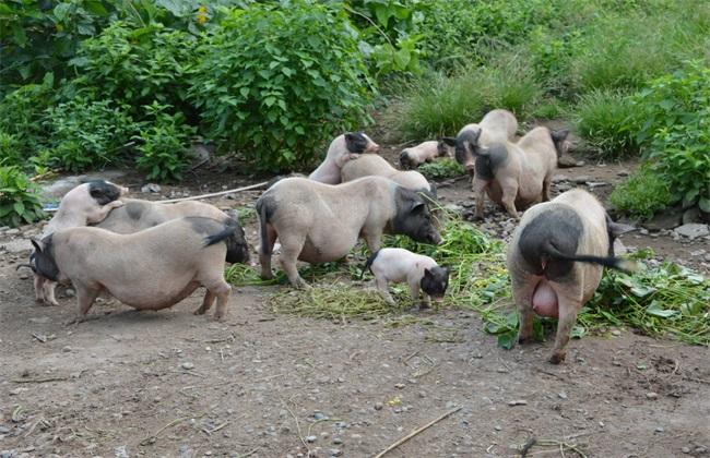 农村养殖好项目 农村养殖