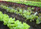 农村种植什么能致富
