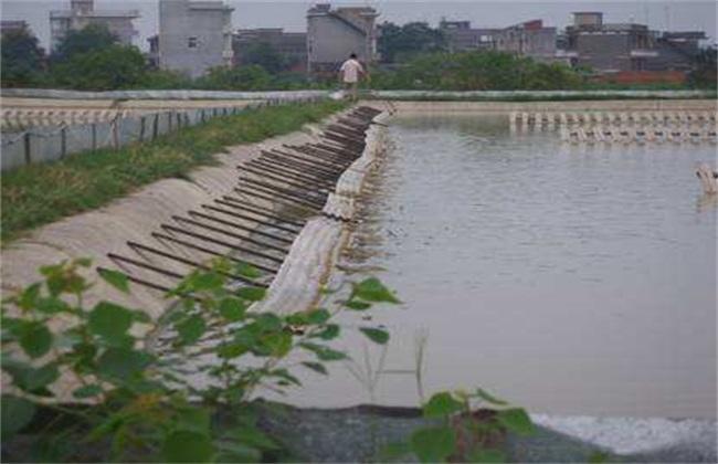 甲鱼的池塘养殖技术