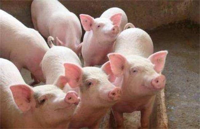 冬季养猪增膘缓慢的原因