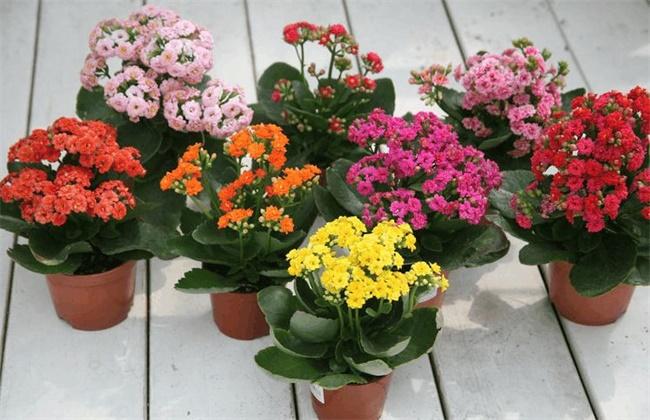 秋冬季节适合养什么花