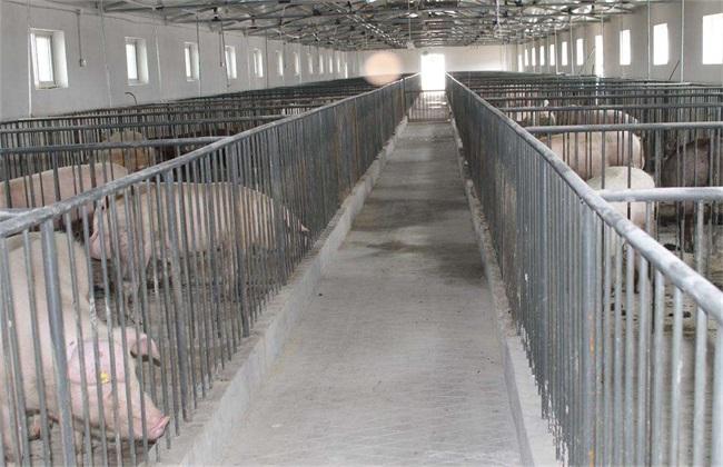 猪舍环境 对猪的影响