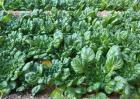 冬天种什么蔬菜耐寒