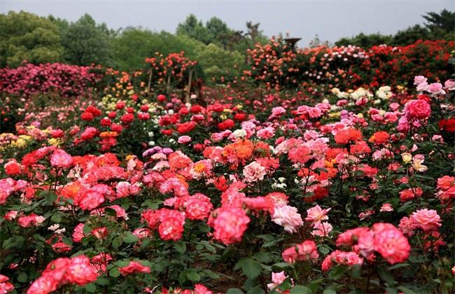 秋天的花有哪些 秋天花卉