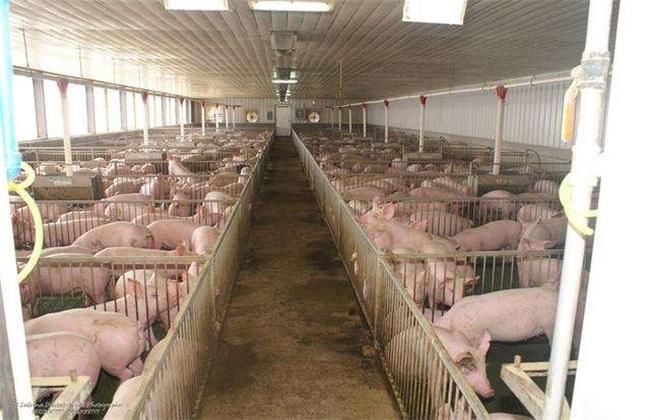 冬季猪舍 潮湿怎么办
