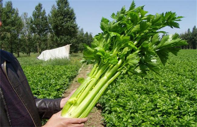 秋冬季节种什么 秋冬季蔬菜