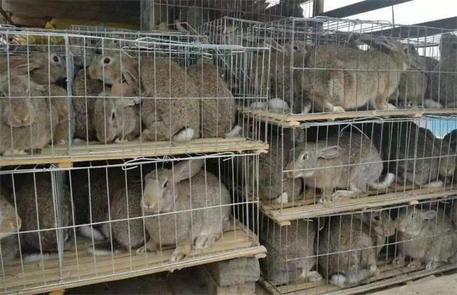 野兔舍怎样建好