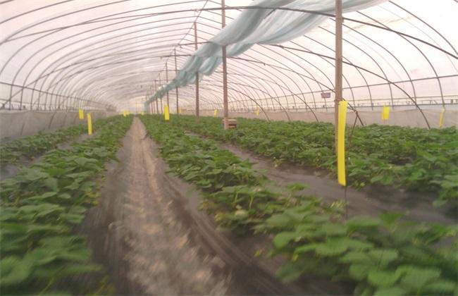 无公害草莓 生产标准