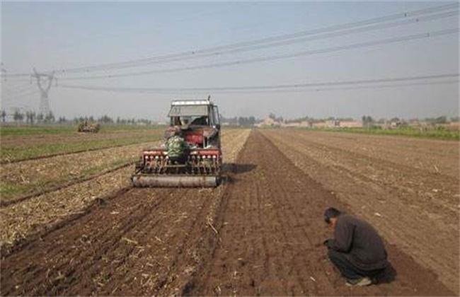 冬小麦常见播种误区