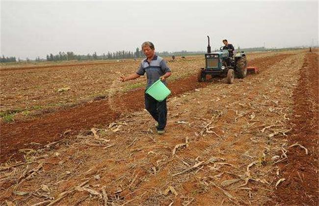 冬小麦常见的播种误区